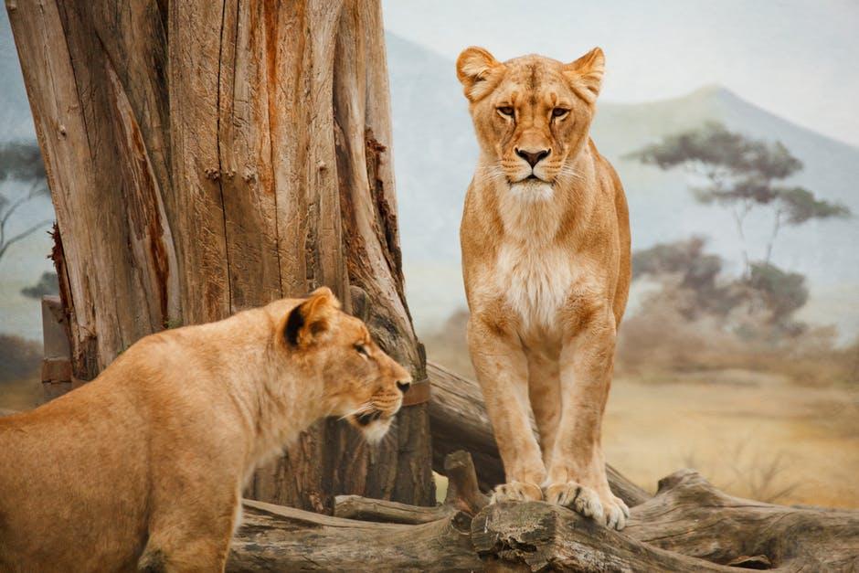6 Tips for Taking Your Family on a Safari - Wellington World Travels | safari with kids | safari with family