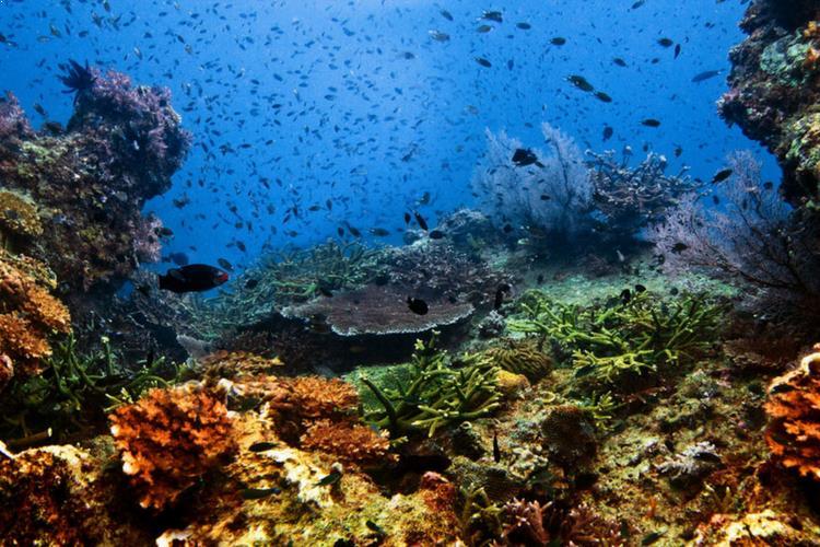 Tiger Reef, Tioman Island, Malaysia